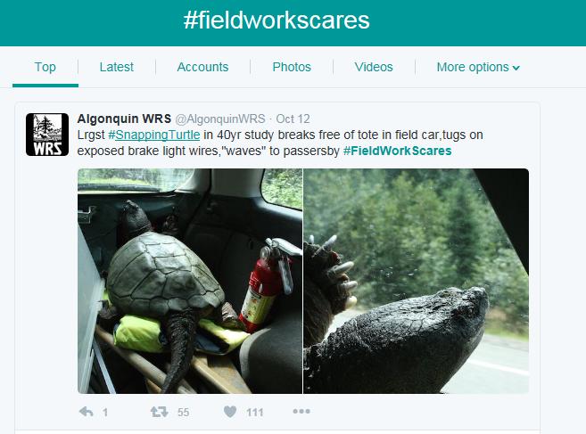 fieldwork-scare2